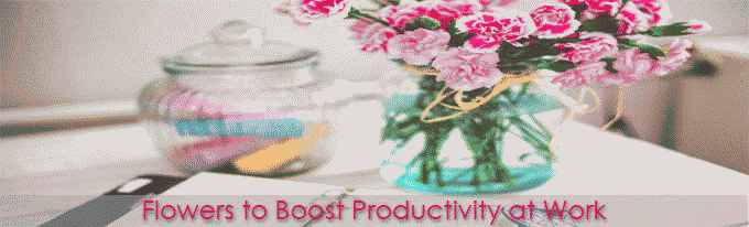 Flowers to Boost Productivity at Work
